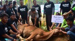 LAZ Harfa Salurkan Daging Qurban untuk Penyintas Tsunami Selat Sunda